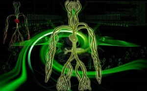8933454-digital-illustration-of-vascular-system-in-colour-background